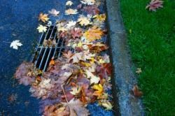 leaves and storm sewer