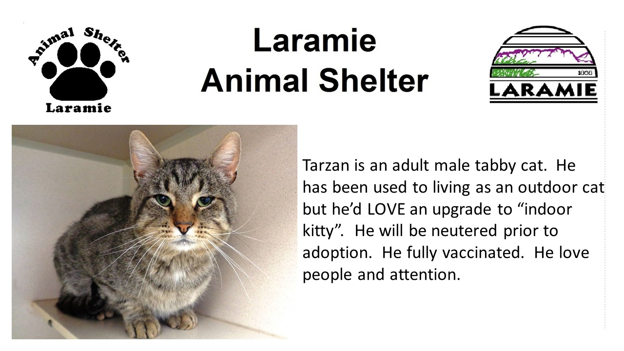 "Tarzan is an adult male tabby cat.  He has been used to living as an outdoor cat but he'd LOVE an upgrade to ""indoor kitty"".  He will be neutered prior to adoption.  He fully vaccinated.  He love people and attention."